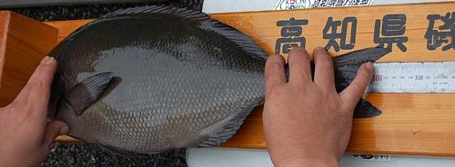2008年の高知県磯釣連盟秋季大会の優勝グレ