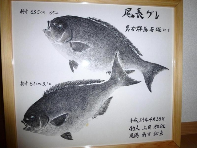 男女群島のグレ(1)